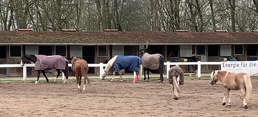Pferde-Quiz