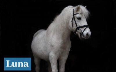 Luna und die anderen Ponys und Pferde warten schon sehnsüchtig …